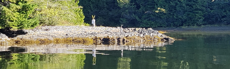 jGB Heron up Bamfield Inlet Sept 2020